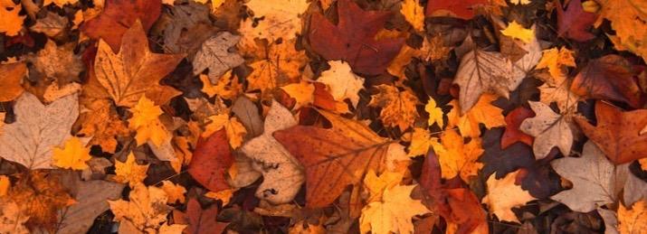 fall-foliage-111315_960_720 (1)